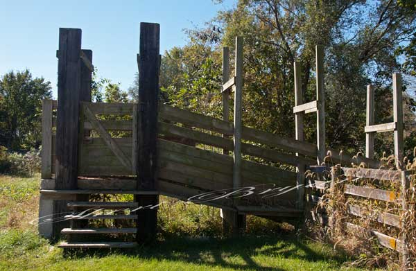 Wooden Livestock Cattle Loading Chute Image 3939 Sheri Bryan Stock